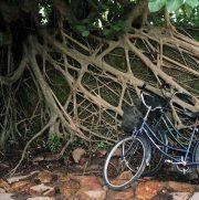 Vietnam_condao_roots_bikes-w1240-h1240