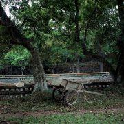 Vietnam_hue_cart-w1240-h1240